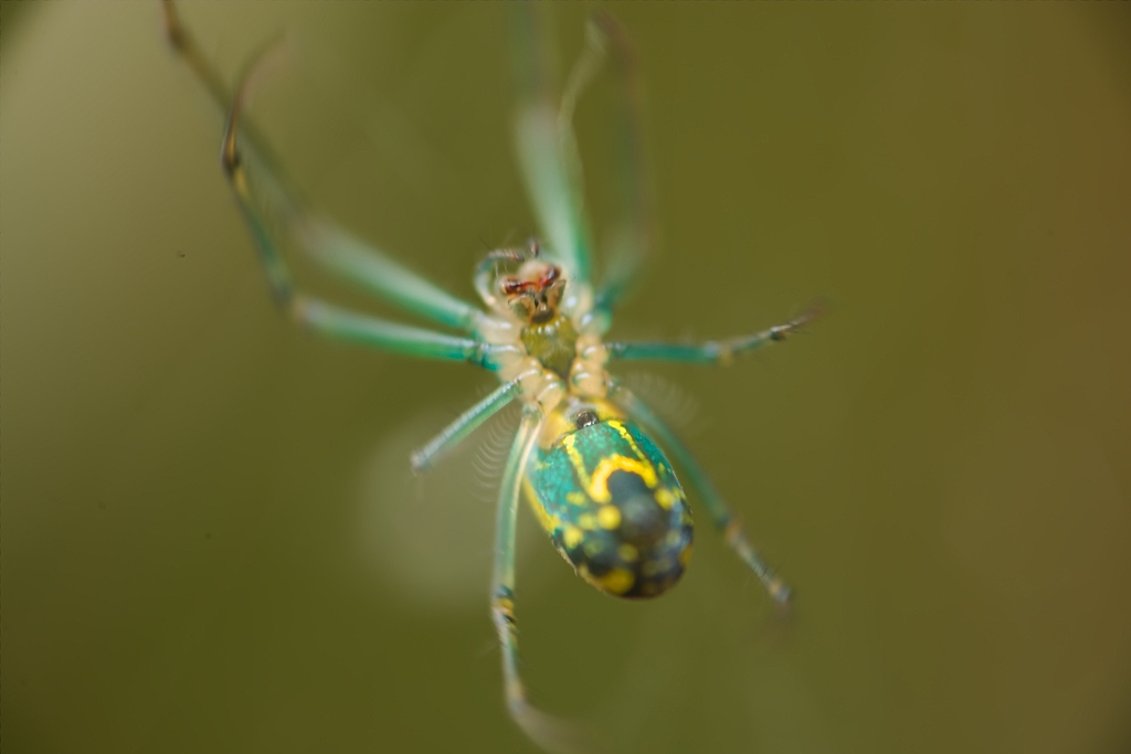 green spider by Bill16 in Member Albums