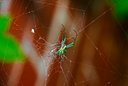 green spider spiced by Bill16 in Member Albums