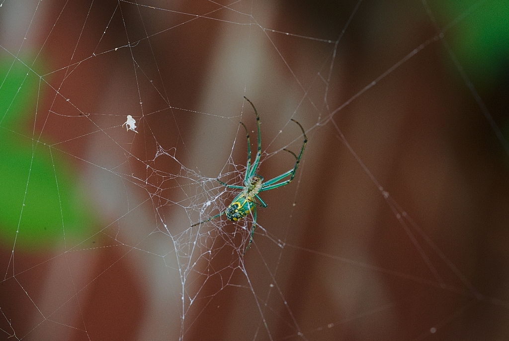 new green spider shots by Bill16 in Member Albums