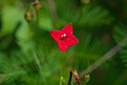 red flower by Bill16 in Member Albums