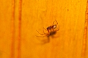 spider tiny by Bill16 in Member Albums
