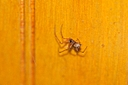 tiny spider by Bill16 in Member Albums