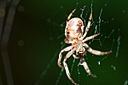 spider by Bill16 in Member Albums