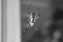 B and W spider by Bill16 in Member Albums