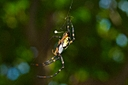 big spider by Bill16 in Member Albums