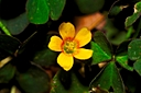 yellow flower by Bill16 in Member Albums