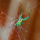 redux spider by Bill16 in Member Albums