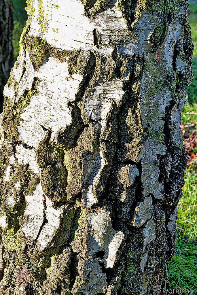 Bark by wornish in Member Albums