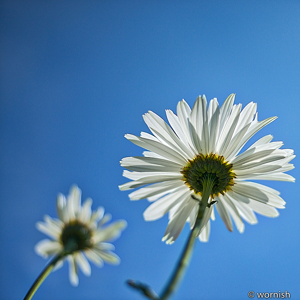 White Flower by wornish in Member Albums