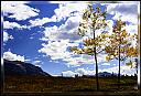 Canmore in Fall by drathbun in Member Albums
