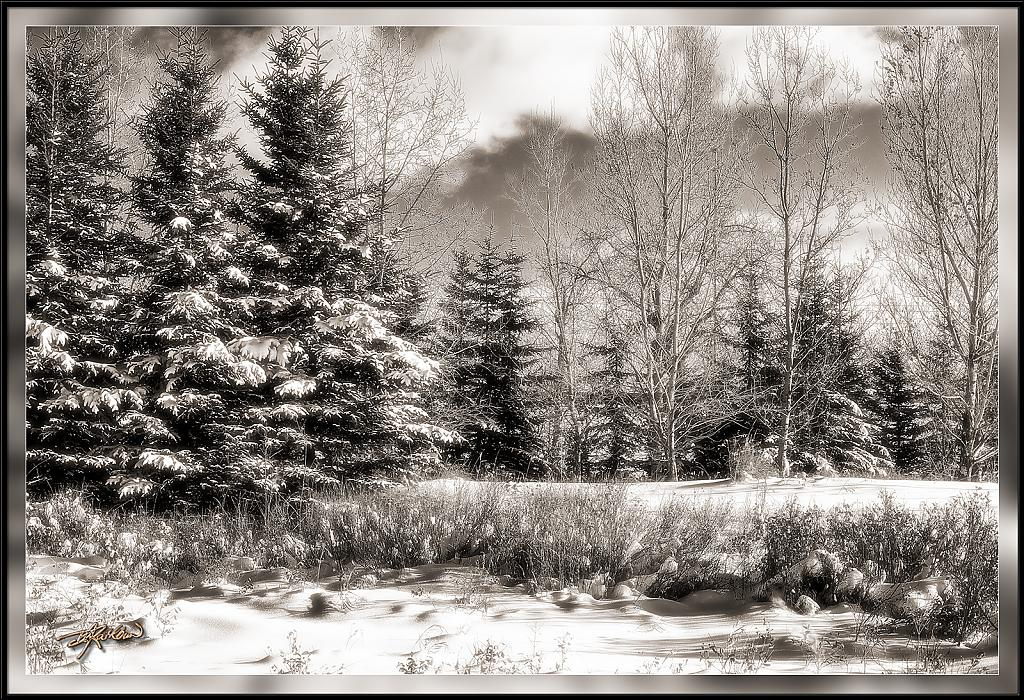 Snowscape by drathbun in Member Albums