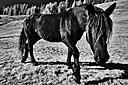 Infrared horse by Englischdude in Member Albums