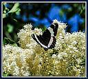 butterfly 2 by Curt in Member Albums