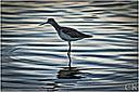 sandpiper by Curt in Member Albums