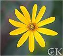 Its Yellow by Curt in Member Albums
