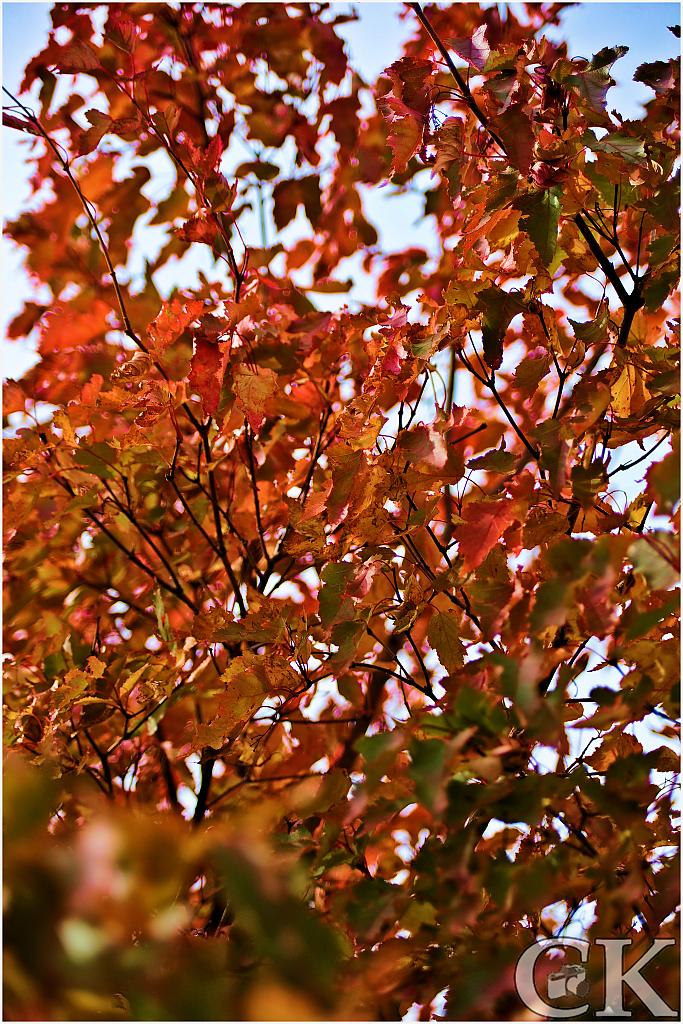 fall colors by Curt in Member Albums