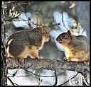 more fun in the tree. by Curt in Member Albums