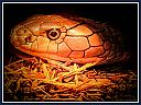 King Cobra up close. by Curt in Member Albums