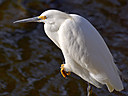 egret8 639580 by wev
