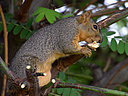 squirrel 632322 by wev in wev's Random stuff