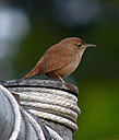 wren5 by wev
