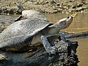 Reptiles of Bolivian Pampas by dramtastic in Member Albums