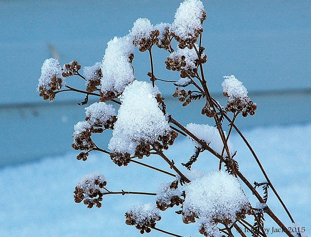Winter Bush by fotojack in Anything & Everything