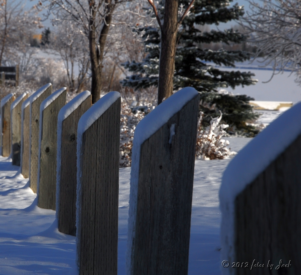 All in a Row by fotojack in Nature