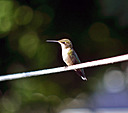 Hummingbird by SteveL54 in Member Albums