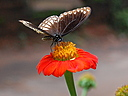 butterfly by janetius in Member Albums