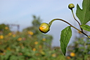 Road Side Wild Plants by janetius in Member Albums