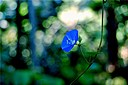 blue flower by janetius in Member Albums