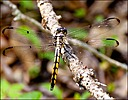 Dragonfly by Mike D90 in Insects