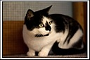 Huckleberry 2 by Mike D90 in Pets & Domestic Animals