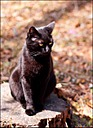 Miss Kitty by Mike D90 in Pets & Domestic Animals