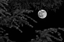 Full Moon by Revet in Member Albums