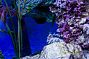 Aquarium Portraits by Revet in Member Albums