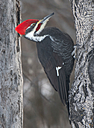 pileated 11 Dec 2019 by Don Kondra in Member Albums