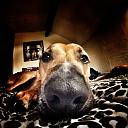 My dog Kaiser by HelpImUpsideDown in Member Albums