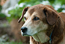 2014 0718 dsc 1861 d200-1 by BarefootPilgrim in D200 Dogs 2014