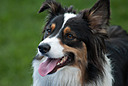 2014 0718 dsc 1948 d200-1 by BarefootPilgrim in D200 Dogs 2014