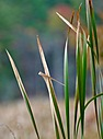 swamp grass by 01301johnny in Member Albums