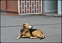 dog by DraganDL in Member Albums