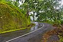 Kerala Forest by Pappadi in Member Albums