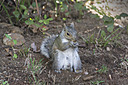 1595 squirrel by TommysG in Member Albums