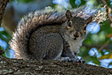 squirrel by TommysG in Member Albums