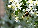 bee by jdeg in Member Albums