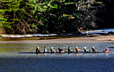 Dartmouth College Crew by randyspann in Randy's Album
