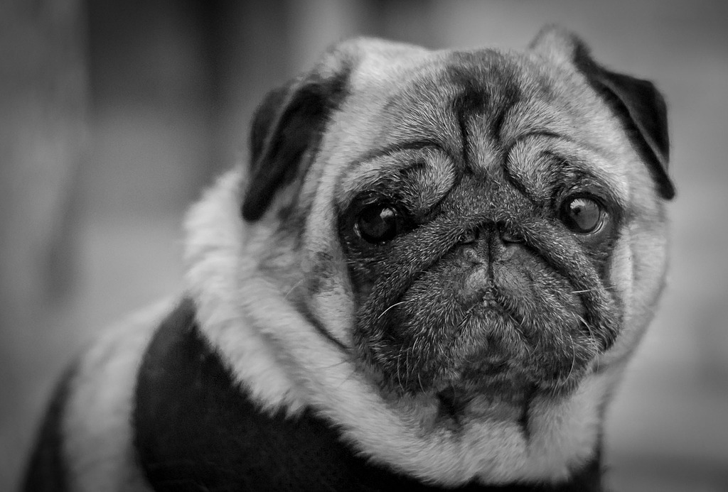 B&W Dog by Chris3000 in Member Albums