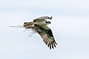 Osprey by Friggs in Member Albums